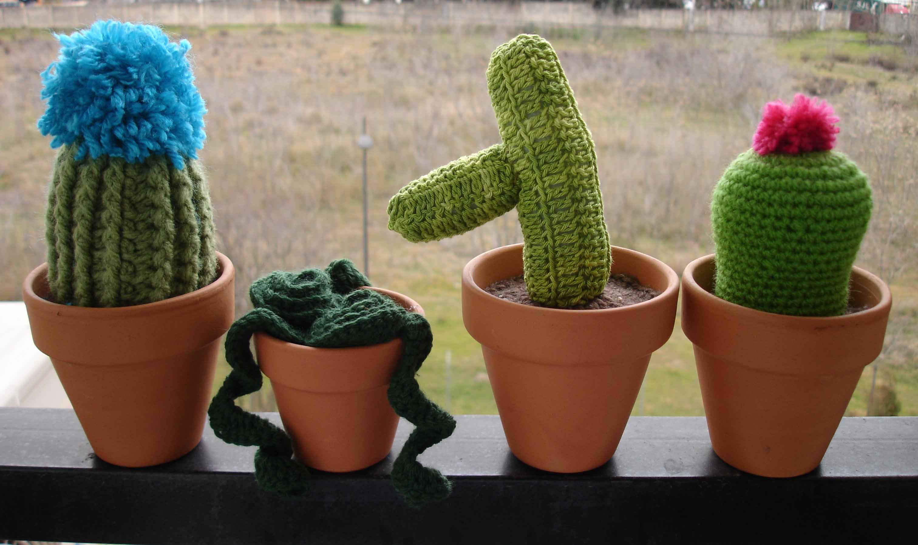 Cactus Belén 1