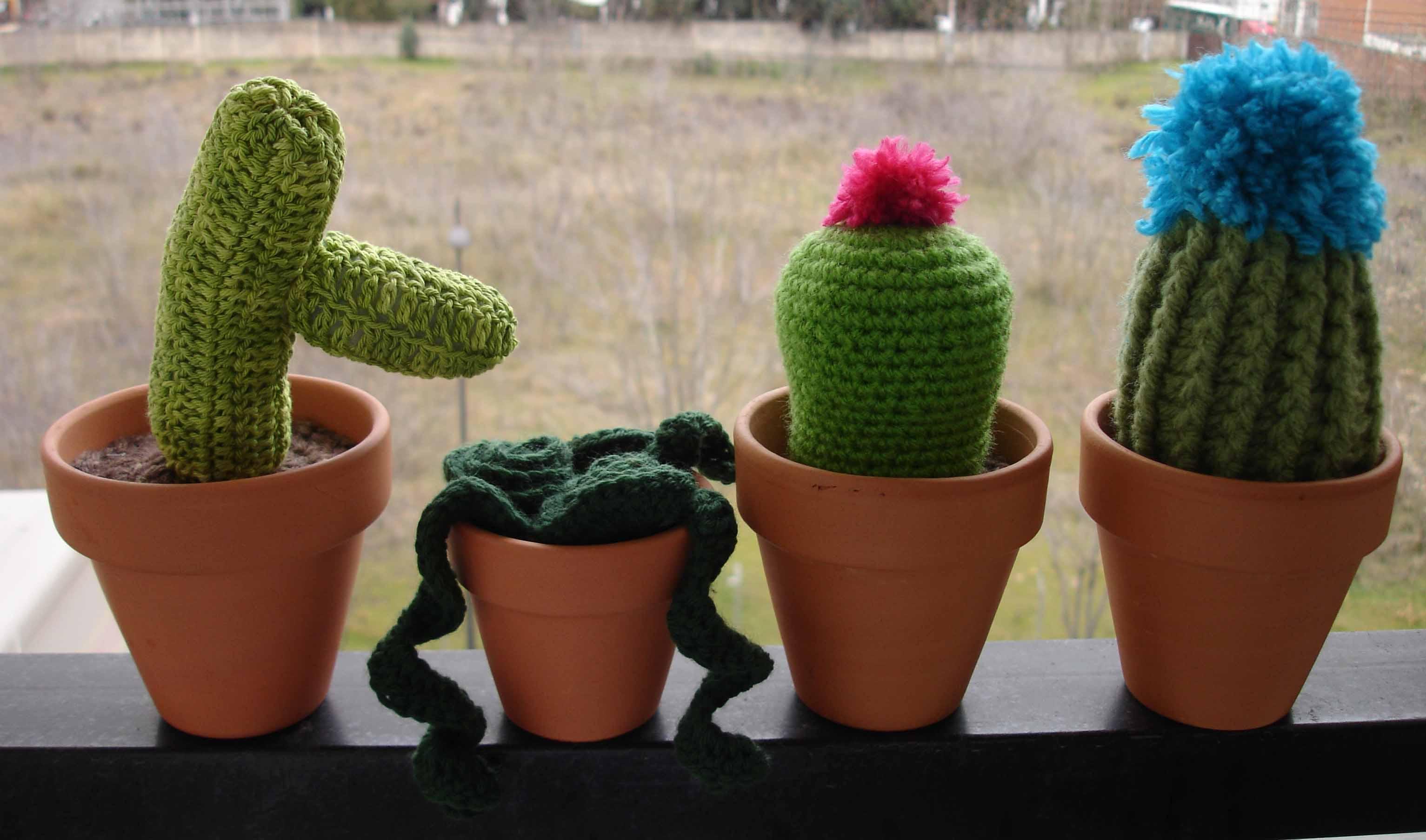 Cactus Belén 3