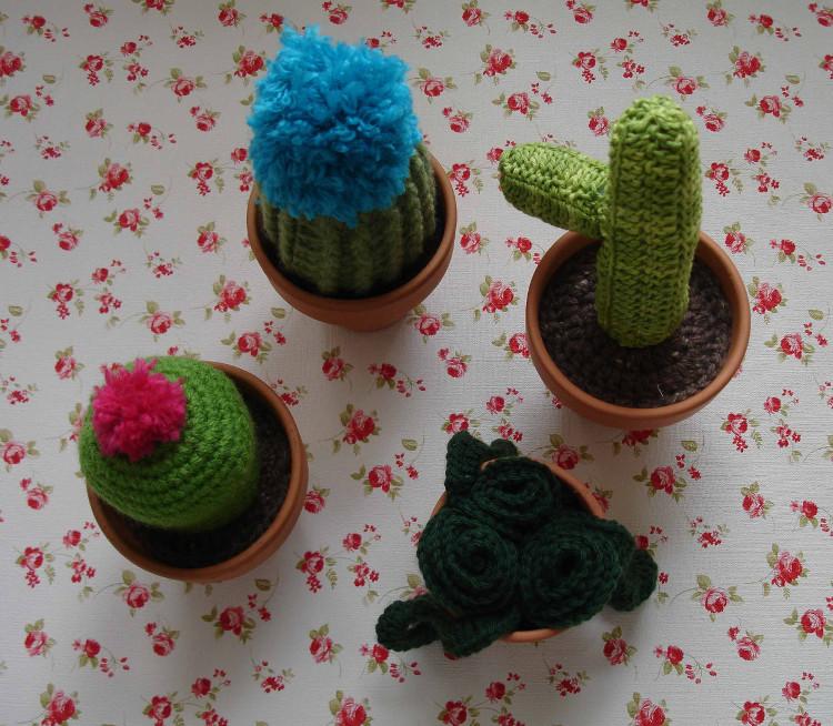 Cactus Belén